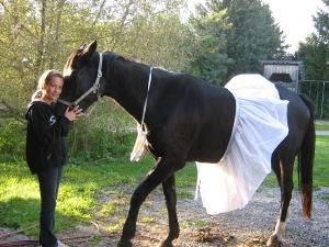 Horse in a tutu